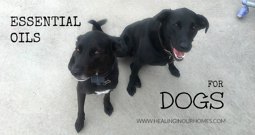 Doterra Essential Oils For Dogs Healing In Our Homes
