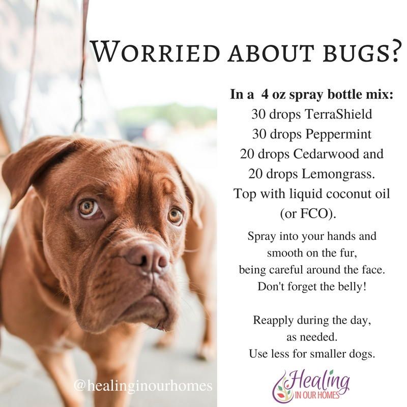 DoTERRA Essential oils for dogs - are they safe?? | Healing